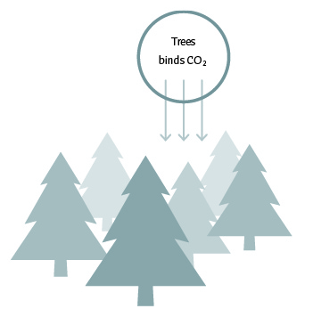 Trees binds co2 illustration